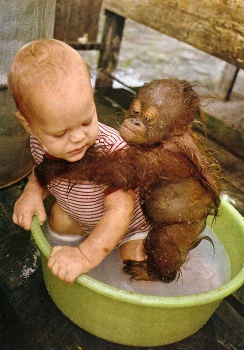 サルと赤ちゃん