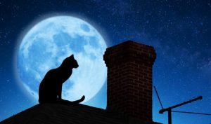 img-cat-on-roof