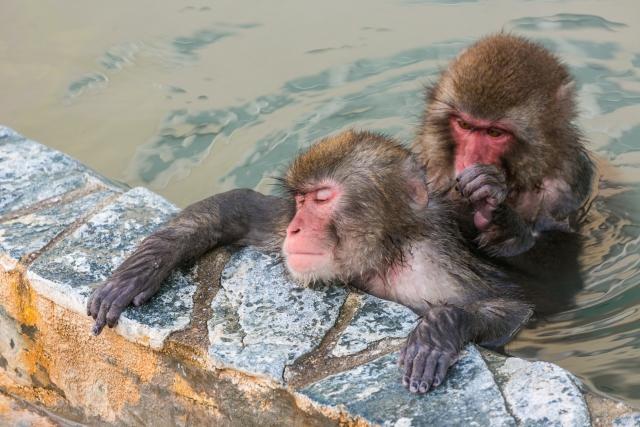 温泉猿_s