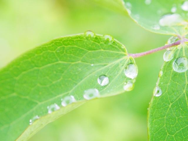 緑の葉 穀雨